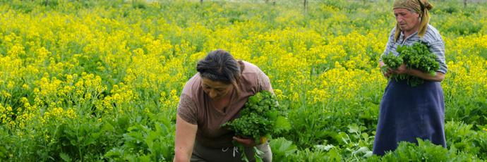 Broccolo aprilatico di Paternopoli