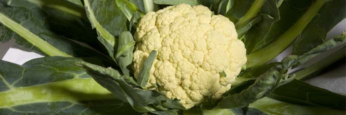Torbole Broccoli