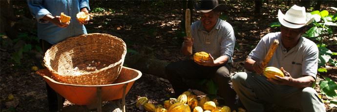 Chontalpa Cacao