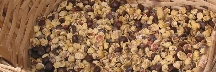 Dried Calizzano and Murialdo Chestnut