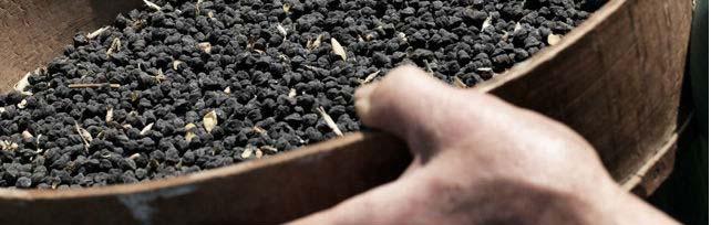 Murgia Carsica Black Chickpea
