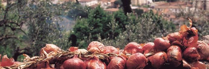 Cipolla di Certaldo