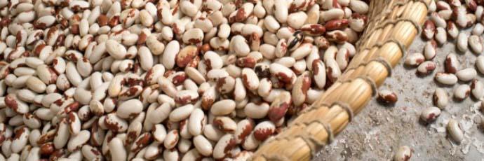Scicli Cosaruciaru Bean