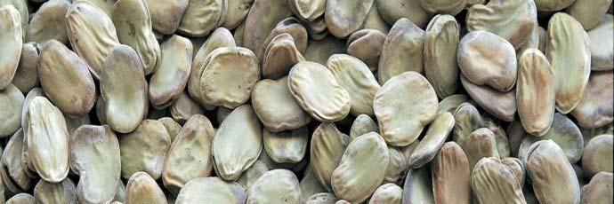 Leonforte Fava Bean