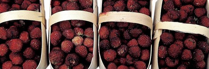 Tortona Strawberry