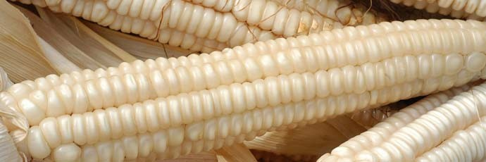 Biancoperla Corn