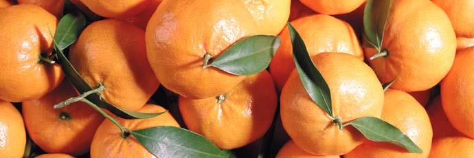 Ciaculli Late Season Mandarin