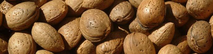 Toritto Almond