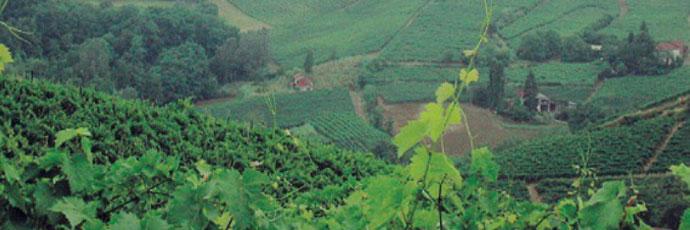 Moscato passito della Valle Bagnario di Strevi