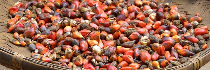 Wild Palm Oil
