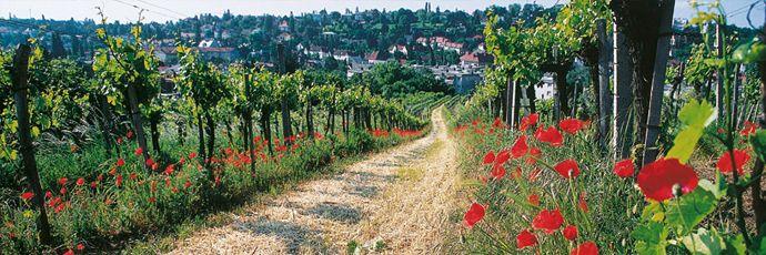 Vienna Gemischter Satz Wines