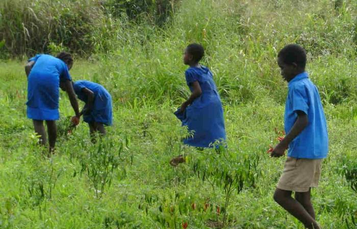 In Togo, tutti nell'orto!