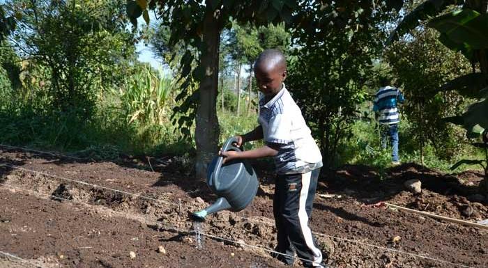 Tausend Obst- und Gemüsegärten in Afrika