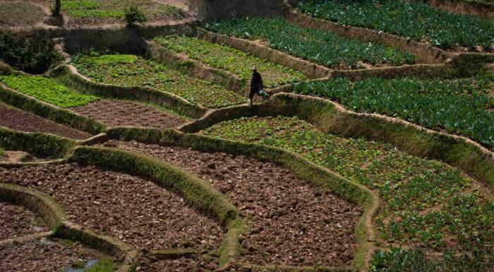 Dix, cent, mille jardins potagers Slow Food