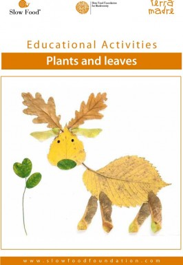 Educational activity  Plants and leaves
