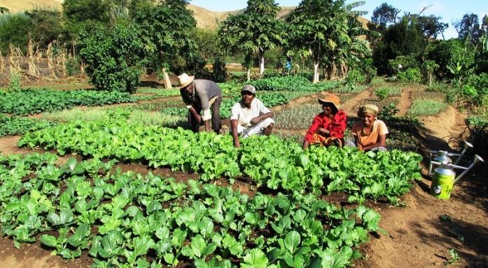 Mille jardins en Afrique