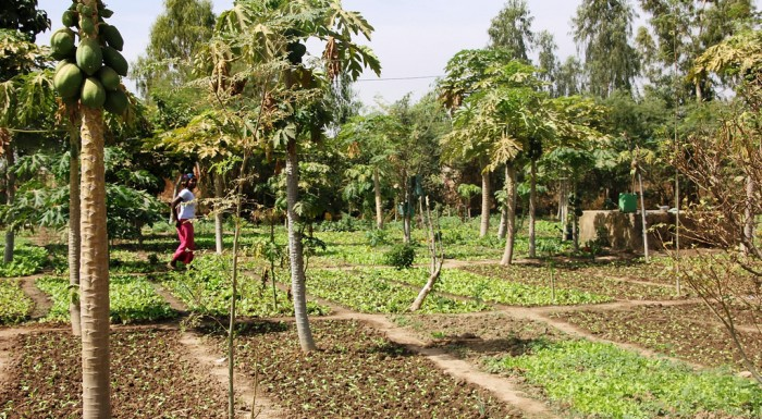 Insieme si può. Fondazione Slow Food e Fondazioni for Africa