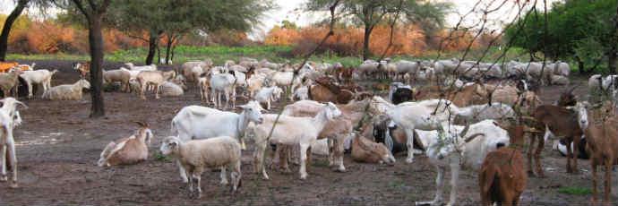 Tucuman Goat Cheese