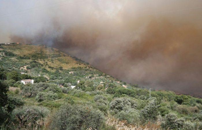 Biodiversity Burns in Sicily