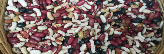 Tepetlixpa Native Beans