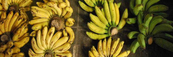 Heritage Yogyakarta Banana Varieties