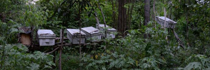 Arusha Stingless Bee Honey