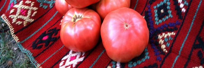 Kurtovo Konare Pink Tomato