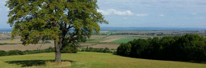 Sorbo della Bassa Moravia