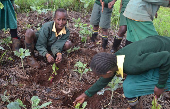 Tutti giù per terra: una mostra per gli orti in Africa