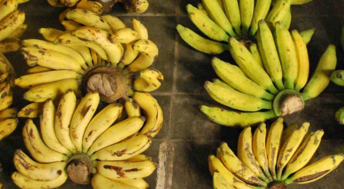 L'Indonesia e le sue antiche varietà di banane