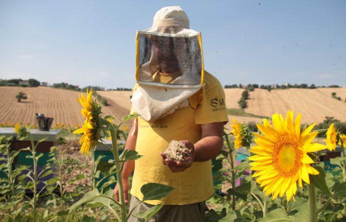 #Hunger4Bees, perché il declino delle api influisce sulla tua alimentazione!