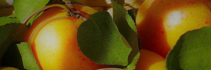 Heirloom Vesuvius Apricot Varieties