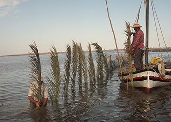 The charfia: Kerkennah Islands Traditional Fishing