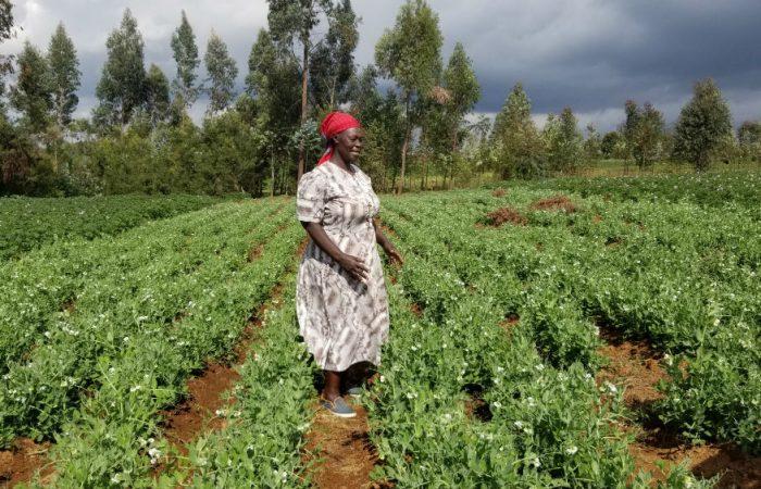 5 storie x 1000 progetti: Salome e le ortiche del Kenya