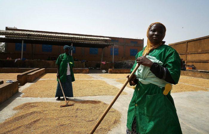 Slow Food in Burkina Faso: difendere la biodiversità per una cooperazione più efficace