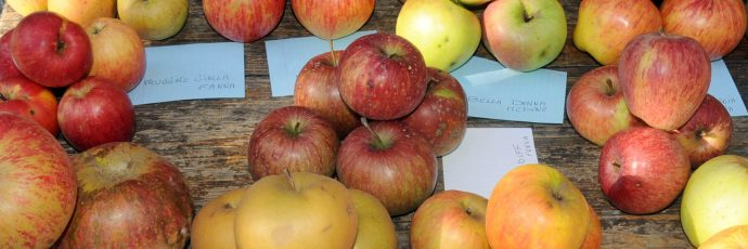 Alto Friuli Heirloom Apples