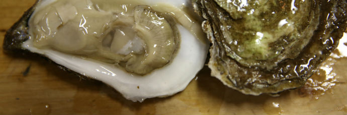 Robinson Cove Oyster