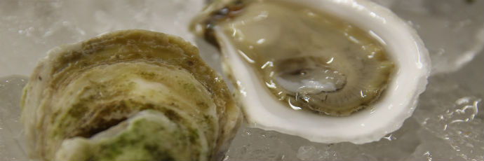 Sober Island Oyster