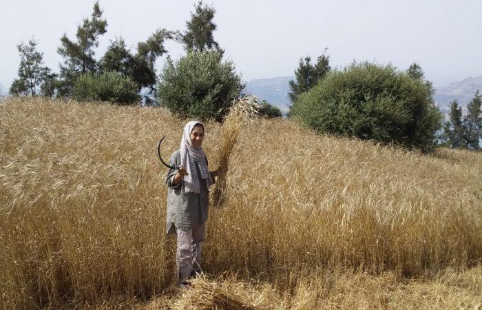 New Slow Food Presidium in Morocco: Rif Einkorn Wheat