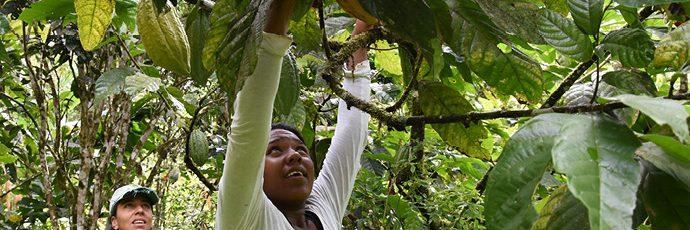 Cacao nacional del Chocó