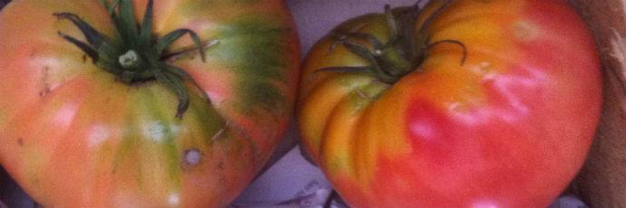 Pomodoro rosa Nagche