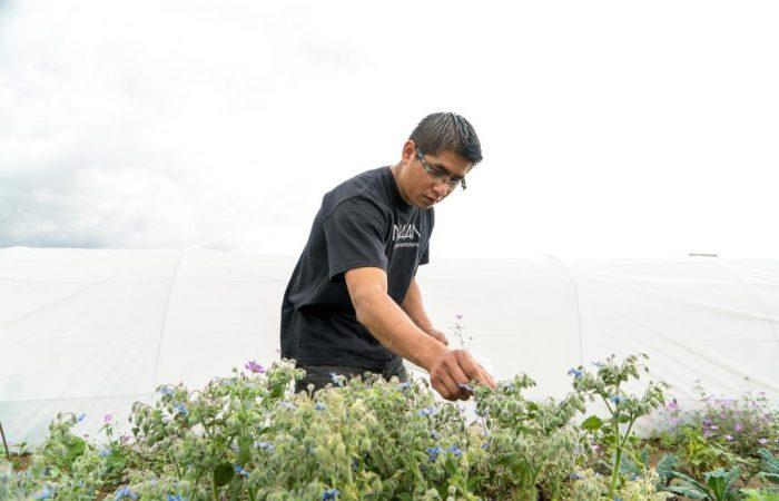 La ricetta dell'Alleanza Slow Food dei Cuochi: Chef Armando Cajero (Messico)