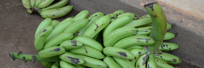 Kitarasa Banana