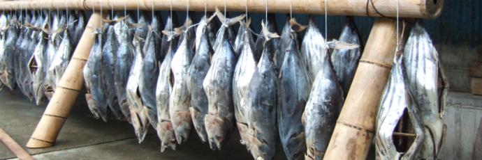 Bonito Preserved in Salt