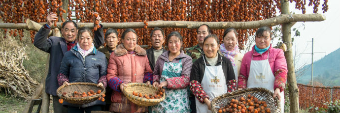 Antica varietà di cachi di Suyang