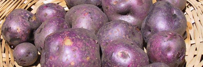 Paramo Potatoes