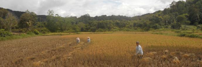 Krayan Black Adan Rice