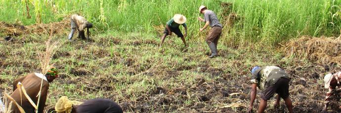 Tule Na Bwana Rice
