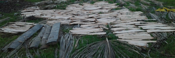 Landang (Native Tapioca)