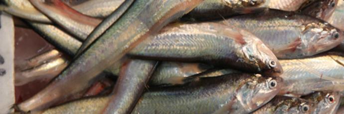 Ung-eo fish